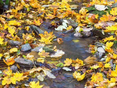 Creek with autumn leaves